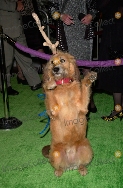 The Grinch Photo - Canine actor KELLY at the world premiere at Universal City of his new movie Dr Seuss How The Grinch Stole Christmas He plays the Grinchs faithful dog Max08NOV2000   Paul Smith  Featureflash