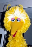 Big Bird Photo 4