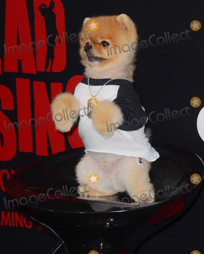 Kim Novak Photo - 11 March 2015 - Los Angeles California - Jiff Pom  Arrivals for Crackles world premiere original feature film Dead Rising Watchtower held at the Kim Novak Theater at Sony Pictures Studios Photo Credit Birdie ThompsonAdMedia