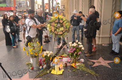 Tom Petty Photo - Flowers placed on Tom Pettys Star on the Hollywood Walk of Fame - a ceremony that was scheduled to take place the day before until confusion over Pettys passing delayed it  Pettys star is next to the star of Johnny Depp who starred in Pettys music video for Into The Great Wide Open - Hollywood CA 10-03-17