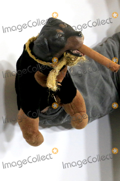 Triumph Photo - LOS ANGELES - AUG 5  Triumph the Insult Comic Dog at the HULU TCA Summer 2016 Press Tour at the Beverly Hilton Hotel on August 5 2016 in Beverly Hills CA