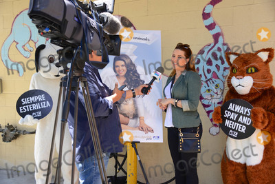 MISS UNIVERSE Photo - Photo by PETASTAR MAXIPx20185318Wearing wings a white gown and a pageant sash reading Angel telenovela star and Miss Universe 1996 Alicia Machado appears with a fluffy cat in a new PETA Latino ad that proclaims Be an Angel for Animals The ad was unveiled today at the Los Angeles Animal Care Center in Downey