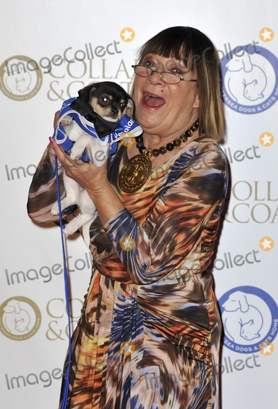 Hilary Alexander Photo - London England Hilary Alexander at the annual Collars and Coats Gala Ball in aid of Battersea Dogs  Cats home at Battersea Evolution on November 7 2013 in London EnglandRef LMK386-45869-081113Gary MitchellLandmark Media WWWLMKMEDIACOM