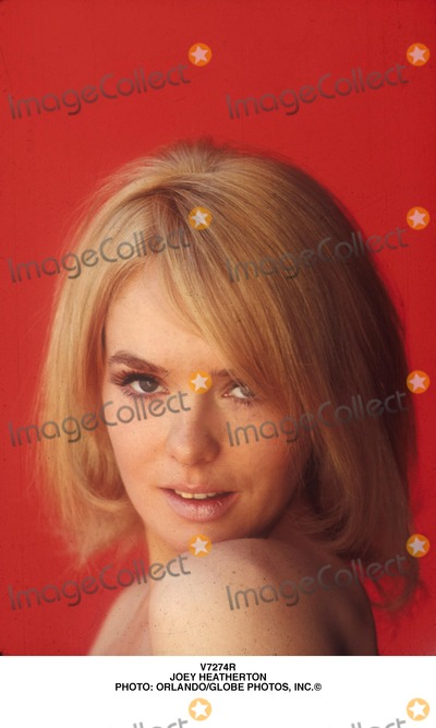 Joey Heatherton Photo - Joey Heatherton Photo OrlandoGlobe Photos Inc
