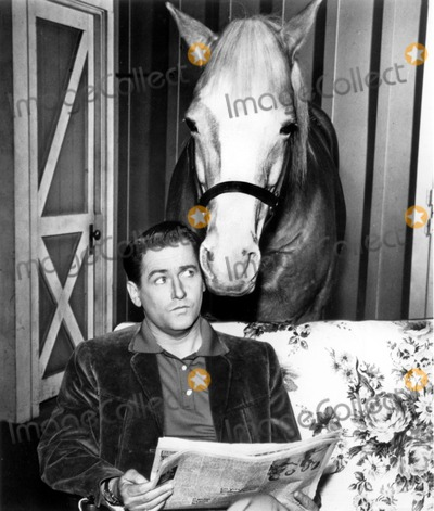 Alan Young Photo - Alan Young in a Scene From Mister Ed Supplied by Globe Photos Inc Movie Stills