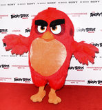 Angry Bird Photo 4